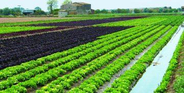 El Parc Agrari garantiza productos frescos