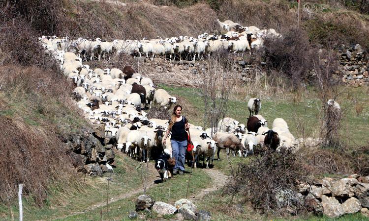 La pastora Anna Plana cuida del ganado en la Vall d'Àssua, en el Pallars. - Foto: ACN. Marta Lluvich
