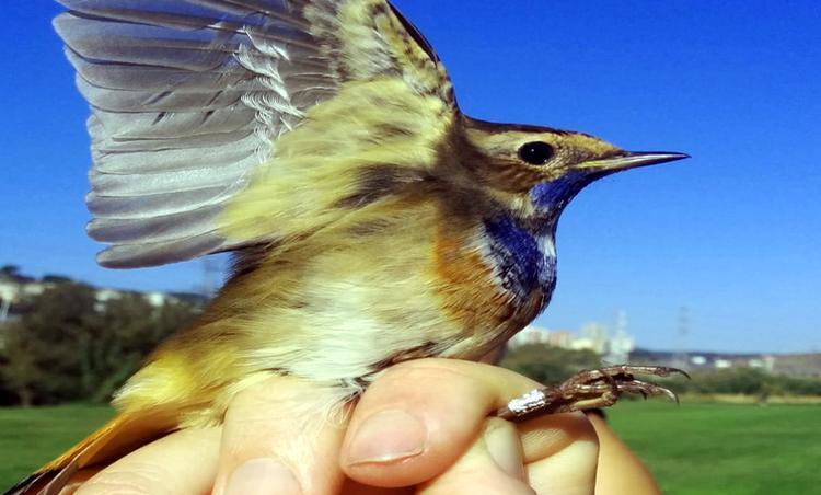 El Parc Fluvial del Besòs es un buen lugar para observar pájaros.